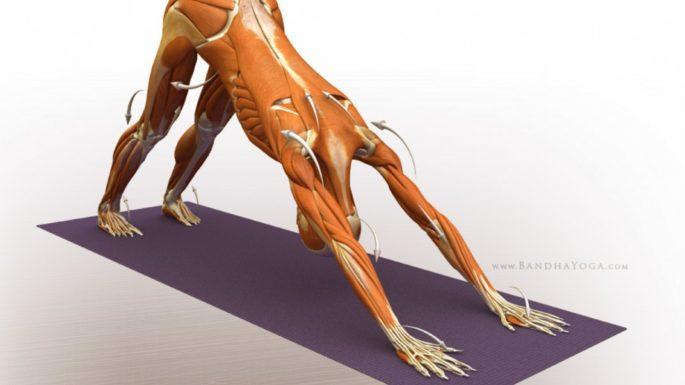5 otthon végezhető gyakorlat csípőfájdalom ellen